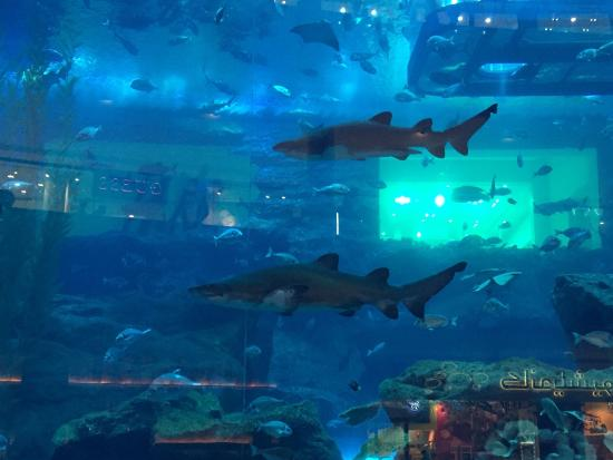 Duba u00ef aquarium   Picture of Dubai Aquarium  u0026 Underwater Zoo, Dubai   TripAdvisor