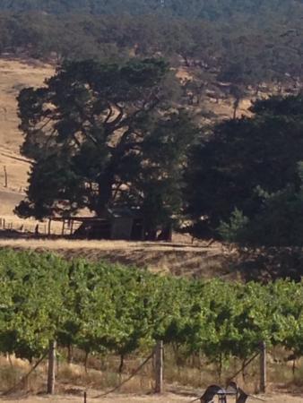 Warrak, Australia: Views from winery