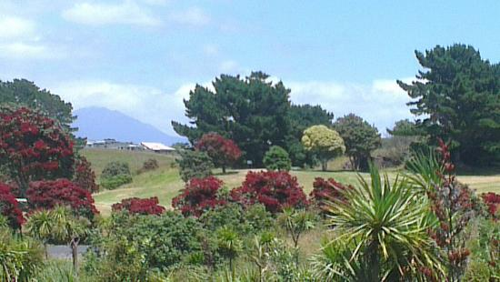 New Plymouth, New Zealand: IMAG4060_large.jpg