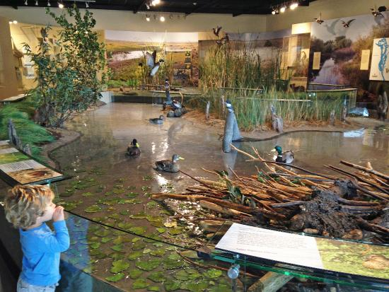 Modesto, كاليفورنيا: Wetlands Environment