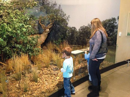 Modesto, كاليفورنيا: Deer Habitat