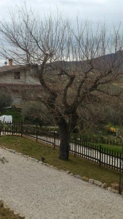 Montalto delle Marche, Ιταλία: Il vecchio acero...
