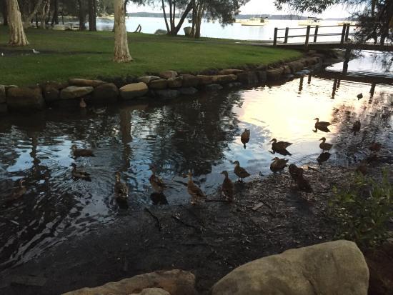Mannering Park, ออสเตรเลีย: photo1.jpg