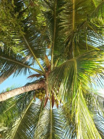 Weston, Barbados: 20160104_163809_large.jpg