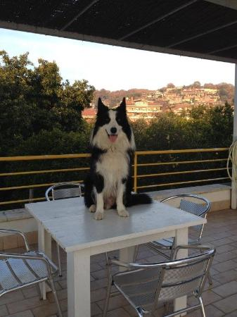 Federico sul tavolo del terrazzo ! - Foto di B&B La Terrazza sul ...