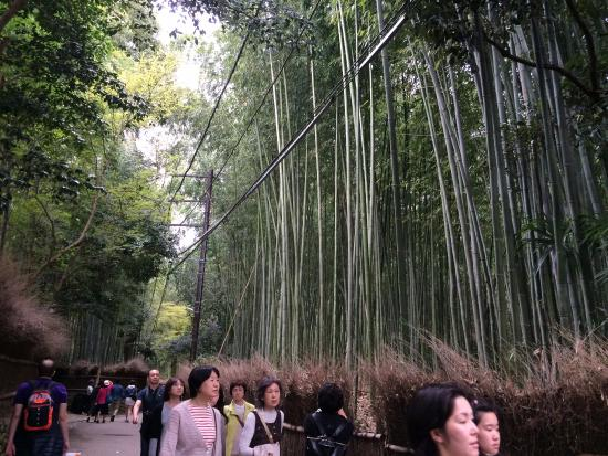 Kyoto Prefecture, Japón: Bamboo forest