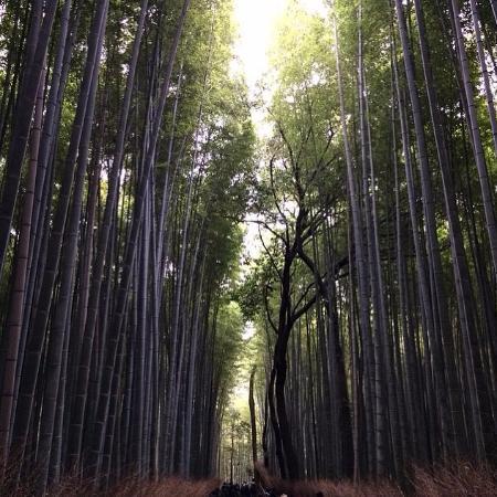 ولاية كيوتو, اليابان: Бамбуковый лес