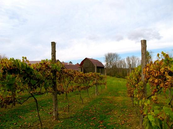 Egg Harbor, WI: Door County Winery