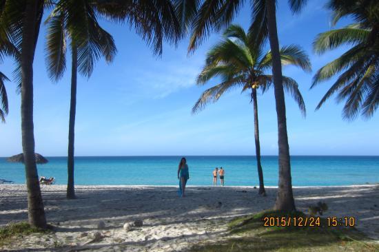 Hotel Club Kawama: palm trees on the grounds