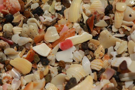 Rigo's Guest House: shells on the beach outside of Rigo's