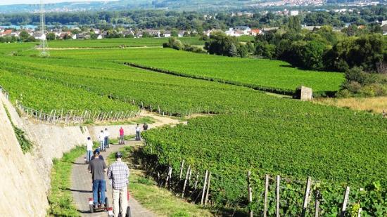 Königstein im Taunus, Alemania: Weinberg Tour im Rheingau