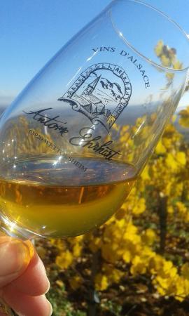Wettolsheim, Francia: Vins d'Alsace Antoine Ehrhart
