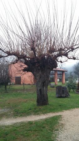 Farra d'Isonzo, İtalya: 20160109_135238_large.jpg