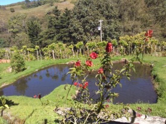 Copey, Costa Rica: Sitio de la pesca