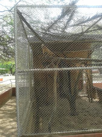 Parque Zoo-botanico da Caatinga: Parque Zôo-botânico da Caatinga