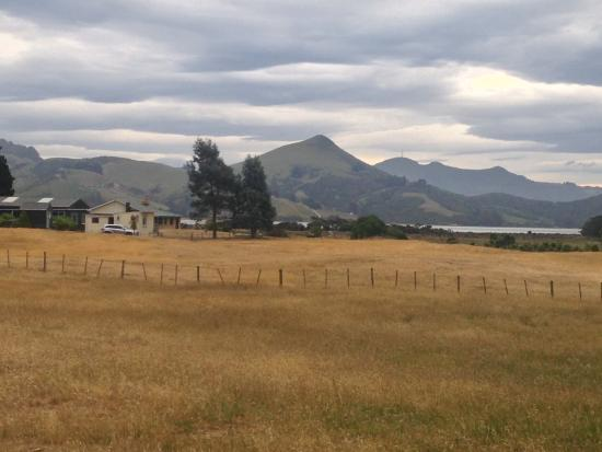 Allans Beach Farmstay: View of the farm and cottage