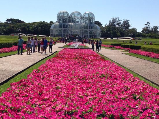 flores jardim botanico curitiba:flores, flores e mais flores – Picture of Jardim Botanico de Curitiba