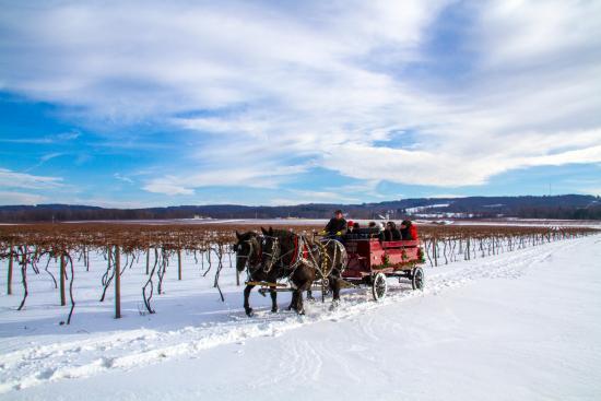 Chautauqua County, estado de Nueva York: Vineyards near the Grape Discovery Center