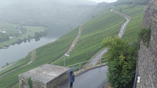 ‪‪Mosel Wine Region‬, ألمانيا: viñedos interminables‬
