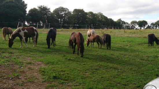 La Foret-Fouesnant, Francja: poney club
