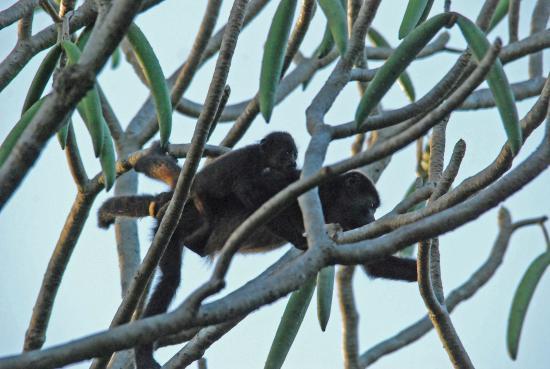 Nosara Retreat: Une faune magnifique