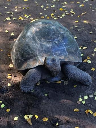 Puerto Villamil, Ecuador: Turtle friend we saw along the way!