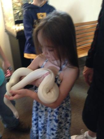 DeLand, FL: Gentle snakes to hold for all ages.