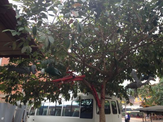 Star Hotel: tree