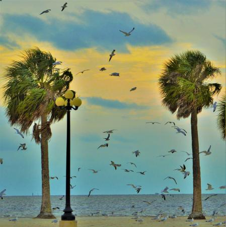 Alfred McKethan / Pine Island Park: Pine Island Park