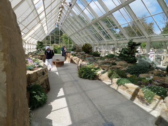 Echinacea Picture Of Rhs Garden Harlow Carr Harrogate Tripadvisor
