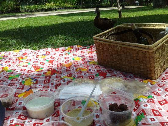 Jardin Botanico de Medellin: picnic de Insitu
