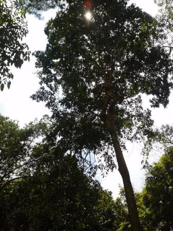Jardin Botanico de Medellin: grandes arboles