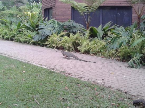 Jardin Botanico de Medellin: Iguana