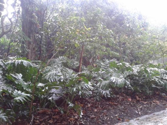 Jardin Botanico de Medellin: Bosque