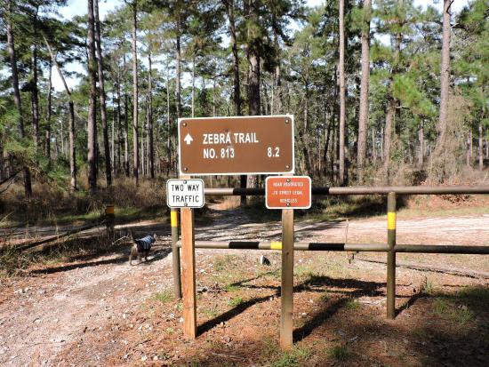 another sign for an atv trail picture of sam houston national rh tripadvisor com