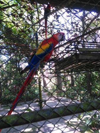 Tambor, Costa Rica: IMG_20160114_135137_large.jpg