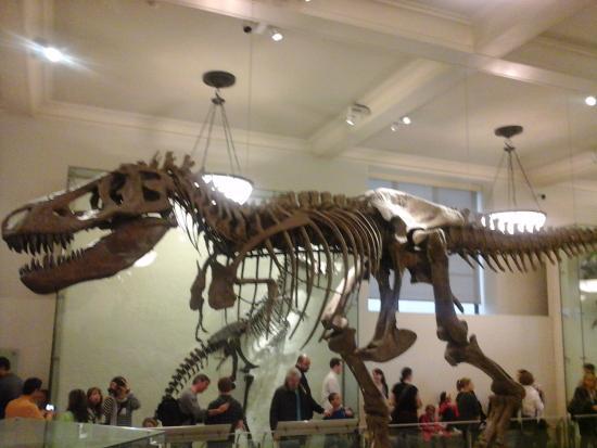 natural history museum picture of new york city new york rh tripadvisor com