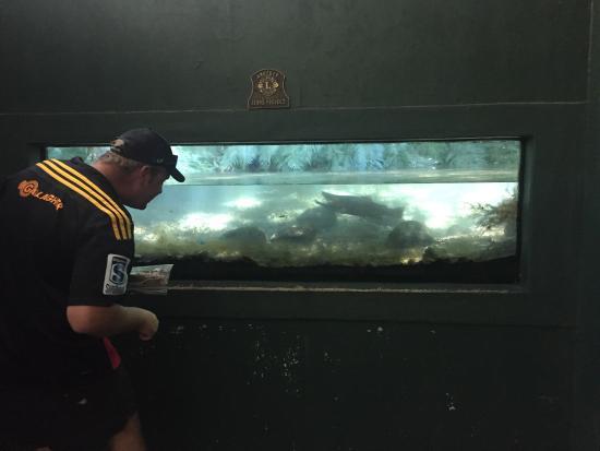 Turangi, Neuseeland: photo0.jpg