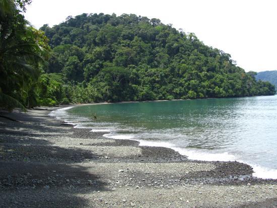 Playa Nicuesa Rainforest Lodge: Beach Golfo Dulce