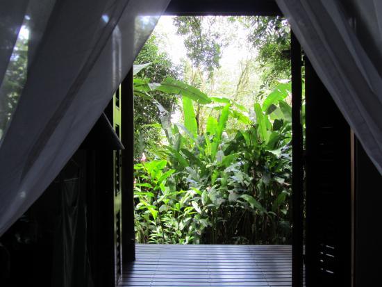 Playa Nicuesa Rainforest Lodge: Mango House room view to the nature