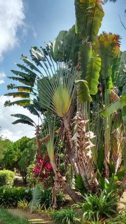 Tenom, Malaysia: Beautiful palms and other flora