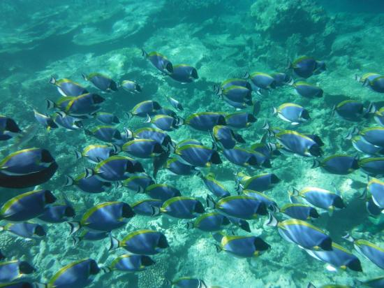 Mirihi: Snorkelling at house reef