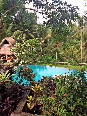 view from our balcony picture of bucu view resort ubud tripadvisor rh tripadvisor com