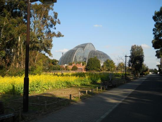 Yumenoshima Park : 熱帯植物園があります