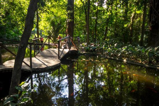 pozo de los deseos picture of jardin botanico la laguna
