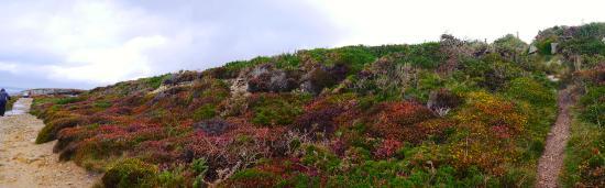 Finistere, Fransa: Magie de la lande bretonne en Finistère