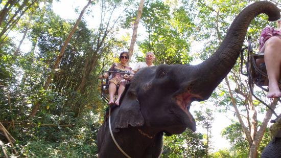 Kok Chang Safari Elephant Trekking: добрый слон
