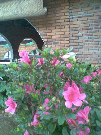 Yen Gia Quan : More flower trees in a corner of restaurant