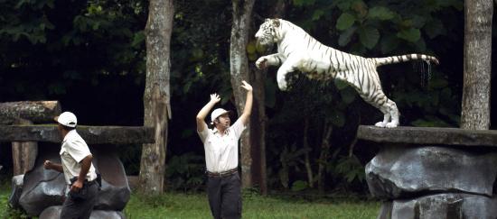 taman safari prigen picture of taman safari prigen prigen rh tripadvisor co uk