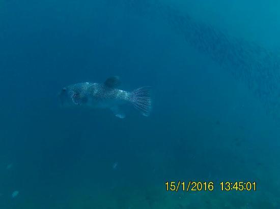 Tavewa Island, Fiji: FHD0381_large.jpg